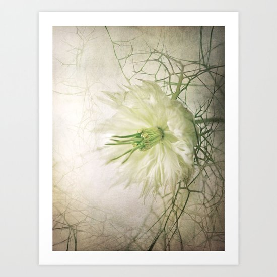 Love in the Mist Art Print