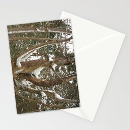 A dead pine Stationery Cards