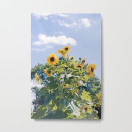 Sunflowers #1 Metal Print