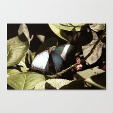 Blue and Black Butterfly Color Photography Canvas Print