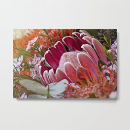Lovely Feather Protea Metal Print