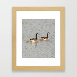 Canadian Geese Family Framed Art Print
