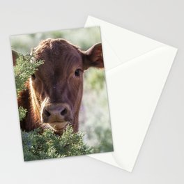 Shy Calf Stationery Cards