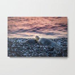 Resting Sea Turtles Metal Print