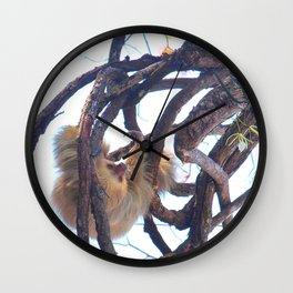 Two-toed sloth and orchids in Costa Rica Wall Clock