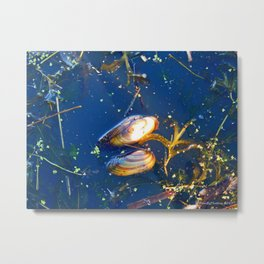 Clams in a Tidal pond Metal Print