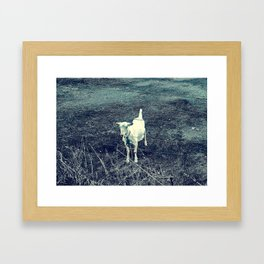 Independent Goat Framed Art Print