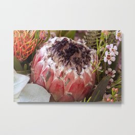 Feather Protea Metal Print