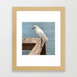 Herring Framed Art Print