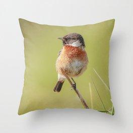 Stonechat Throw Pillow
