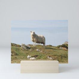 Isle of Berneray Lamb Mini Art Print