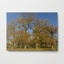 Oak Trees in Late Autumn Metal Print