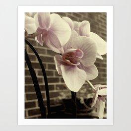 RUST;ORCHID Art Print
