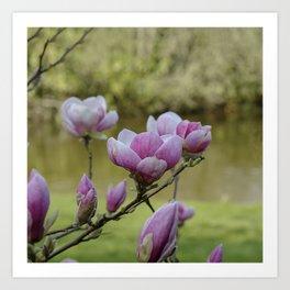 Magnolia Blossomed Art Print