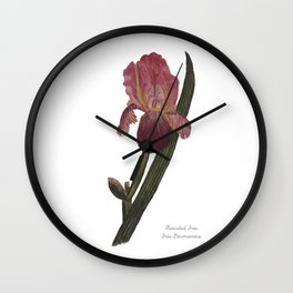 Bearded Iris: Iris Germanica Wall Clock