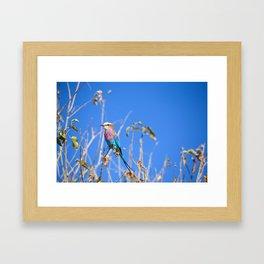 Beautiful Bird Framed Art Print