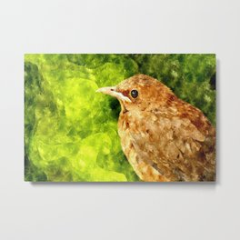 Bird thrush watercolor drawing Metal Print