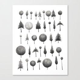 Arbor Vitae Canvas Print