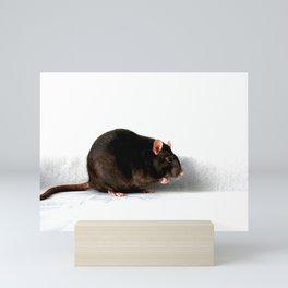 Rat Mini Art Print