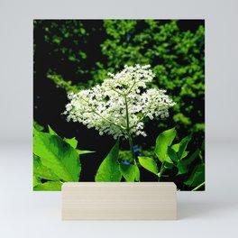 Blossom of elder Mini Art Print