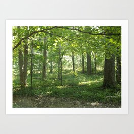Looking into the Forest Art Print