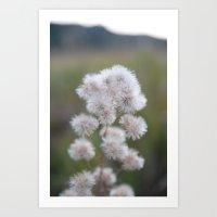 Colorado Wildflower #529 Art Print