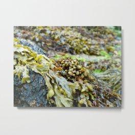Seaweed Series 2 Metal Print