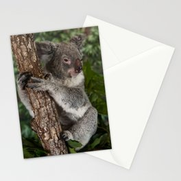 Koala Bear Stationery Cards