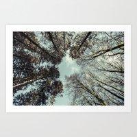 - Lay Down, look Up - Art Print