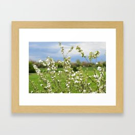 Flowering branches of an apple tree against a blue stormy sky Framed Art Print
