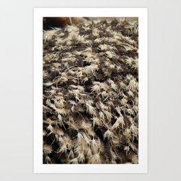 Textura: Ostrich Feathers Art Print