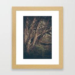 Lakefront Paperbark Framed Art Print