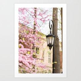 Purple Lampost Blooms Art Print