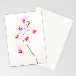Spot-On Pet Photography Stationery Cards