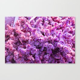 Rest Stop Flowers ~ Salt Flats, Utah Canvas Print