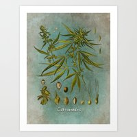 cannabis Art Prints featuring Cannabis by jbjart