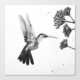 Humming Bird & Flower Canvas Print