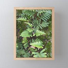 Moss and Fern Framed Mini Art Print