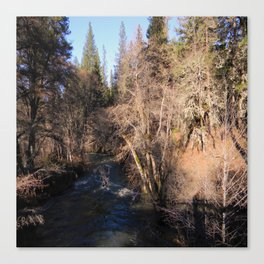 Salt Creek in Hayfork, California Canvas Print
