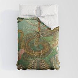 Ernst-haeckel-Chaetopoda Comforters