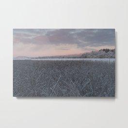 Frozen Sedge Metal Print