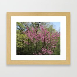 Blooming Woodland Framed Art Print