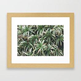 Aloe, mate. Framed Art Print