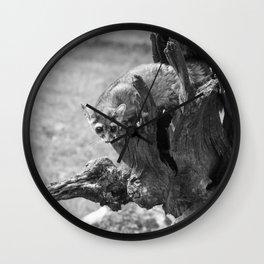 Ringtail #3 Wall Clock
