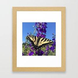Swallowtail Framed Art Print