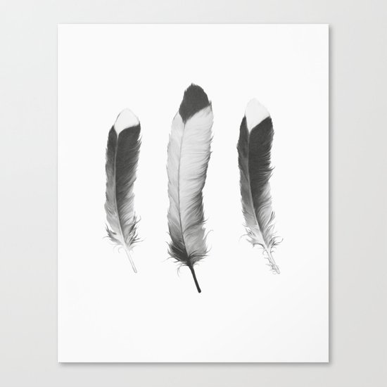 Feathers Sketch Canvas Print
