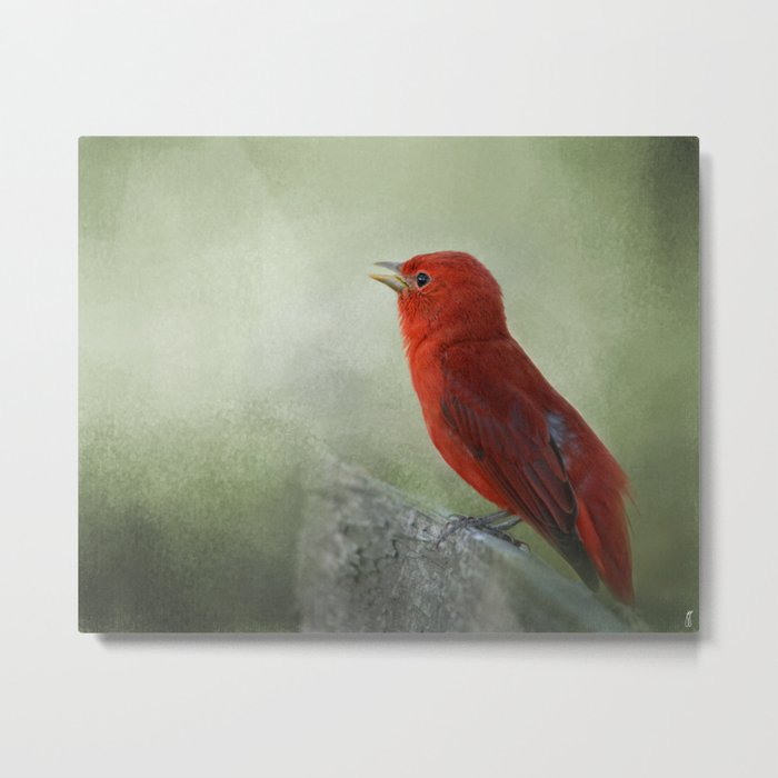 Song of the Summer Tanager 3 - Birds Metal Print