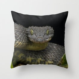 Black Dragon - Venomous Black Bush Viper Snake (Atheris squamigera) Throw Pillow