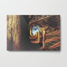 trees in the forest with shadow and sunlight Metal Print