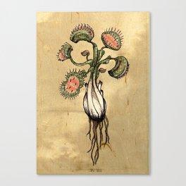Venus Flytrap Canvas Print